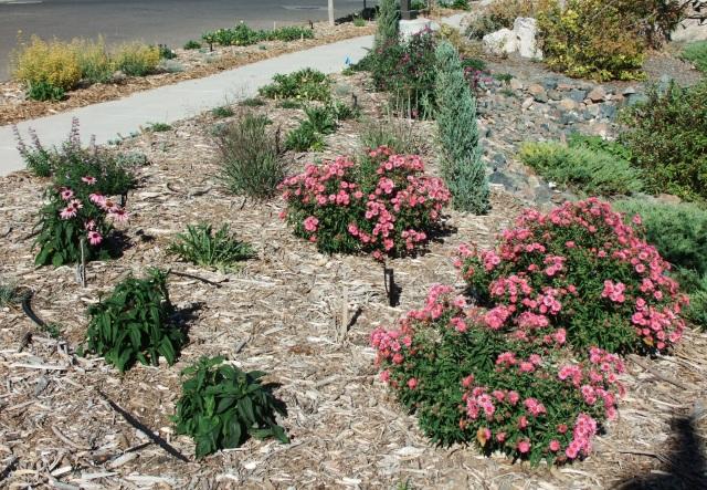 BOPU Garden 09_15_18